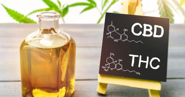 Difference between CBD and THC | MaxDaddy Pet Products