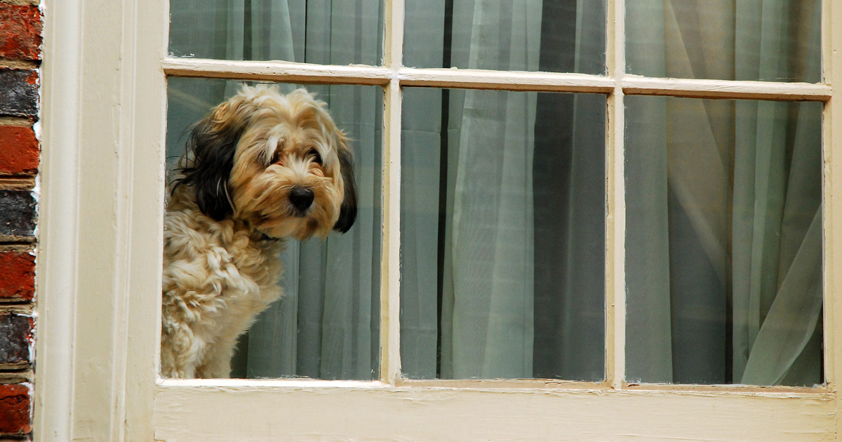 How to Help Your Dog or Puppy with Separation Anxiety